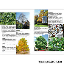 Екзотичні дерева, кущі та ліани в ландшафтах України, фото 3