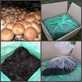 Грибная коробка Королевского Коричневого шампиньона Готовый набор для выращивания грибов Семейный 30х30см.
