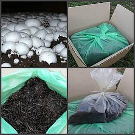 Грибная коробка Белого шампиньона Готовый набор для выращивания грибов Семейный 30х30см.
