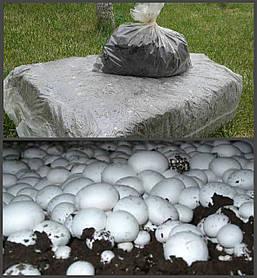 Грибной блок белого Шампиньона + компост + покровный грунт 60х40 см.