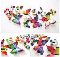 Двойные цветные 4D бабочки для декора., фото 1