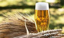 Солод пивоваренный
