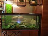 Диффузор с подсветкой для аэрации воды в аквариуме, водоеме, фото 3
