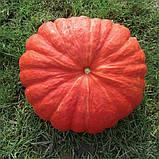 Семена тыквы Руж Виф де Тамп (100 г) Clause, фото 2