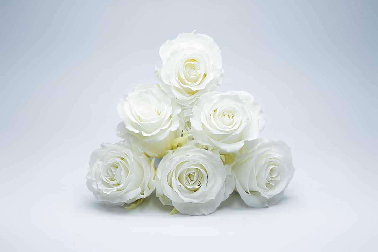 Стабилиованная Белая Роза
