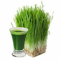 Сок ростков пшеницы Wheat Grass 50 мл замороженный