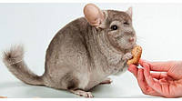 Особенности пищеварения грызунов