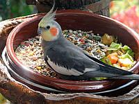 Особенности пищеварения попугаев