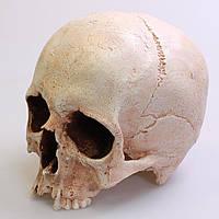 Череп человека, гипс, слепок с натурального из Костницы, Чехия, для декораций, реквизит, пособие
