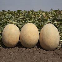 Семена дыни KS 6150 F1 (100 сем.) Kitano
