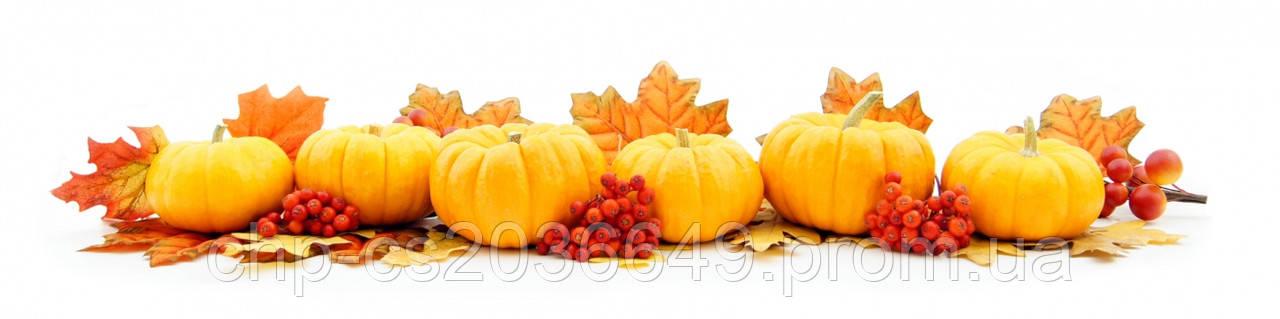 Кухонный фартук из стекла Тыква Осень - скинали  Тыква Осень