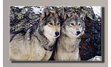 Картина на холсте Пара волков  для интерьера