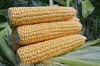Семена сахарной кукурузы Свит Наггет F1 (1000 семян) Agri Saaten