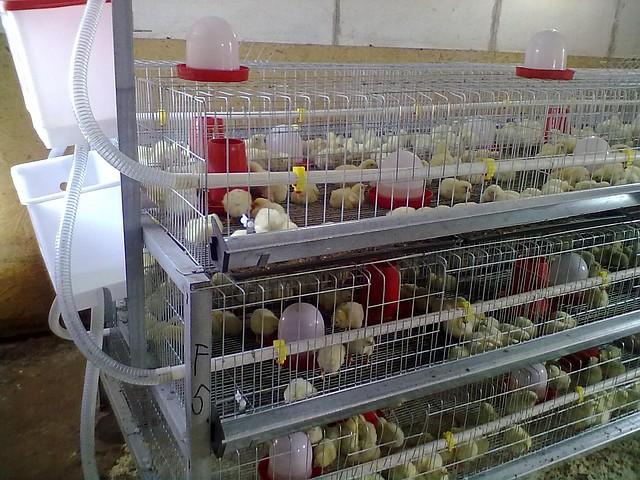 Клетка для цыплят, фото 1