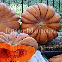 Семена тыквы Мускатная Прованская (500 г) Agri Saaten