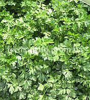 Семена петрушки Итальянский Гигант (100 г)