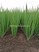 Грин лайн семена лука на перо (25 000 семян) Agri Saaten