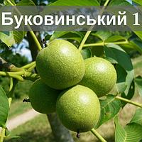 Саженцы ореха Буковинский 1 (Двухлетний)