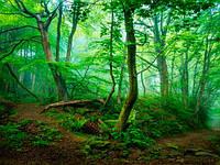 "Фотообои ""Зеленый лес"" 350грн./кв.м."