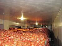 Холодильные камеры хранения лука