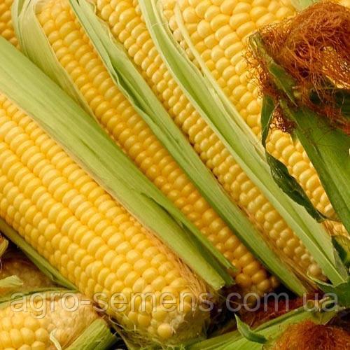 Семена кукурузы ПОДОЛЬСКИЙ 274 СВ ФАО 270
