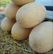 Семена дыни Раймонд F1 (1000 сем.) Hazera
