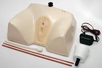 Тренажер для катетеризации мочевого пузыря (женский)Т7 Праймед