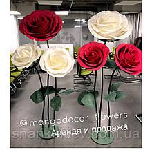 Розы Кусты 2 штуки Аренда Красные с белым