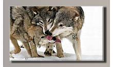 Картина на холсте Семья волков  для интерьера