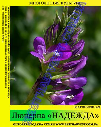 Семена Люцерна 25 кг (мешок), фото 2