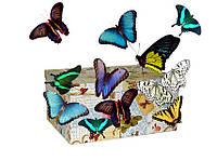 Салют из 10 живых бабочек.