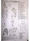 Анатомічна розмальовка ( анатомія), фото 2
