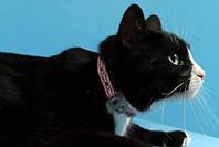 Coastal (Костал) Lazer светоотражающий ошейник для котов 1смх30см