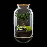 Декоративный флорариум в банкеиз эко-стекла Ф2