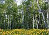 Фотошпалери *Лісові красуні* 134х194