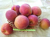 Крупноплодный Дуки, саженцы абрикос (поздний)