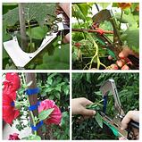 Садовый ленточный степлер для подвязывания растений TAPETOOL, фото 5