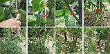 Садовый ленточный степлер для подвязывания растений TAPETOOL, фото 9