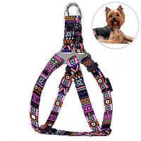 Шлея для Собак BronzeDog Urban Этническая Фиолетовая, фото 1