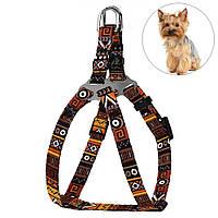 Шлея для Собак BronzeDog Urban Этническая Оранжевая, фото 1