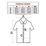 Сорочка чоловіча, прямого покрою, з коротким рукавом Birindelli 03-150 80% бавовна 20% поліестер L(Р), фото 3