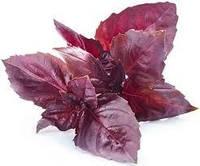 Базилік червоний для мікрогріна, пророщування, біо насіння Basil Red