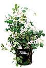 30л Grow Bag УСИЛЕННЫЙ - Агротекстильный горшок 34х34 см, фото 2