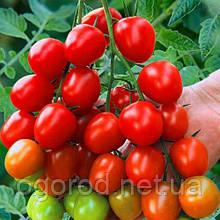 Ачико F1 10 шт семена томата черри низкорослого Cora seeds Италия
