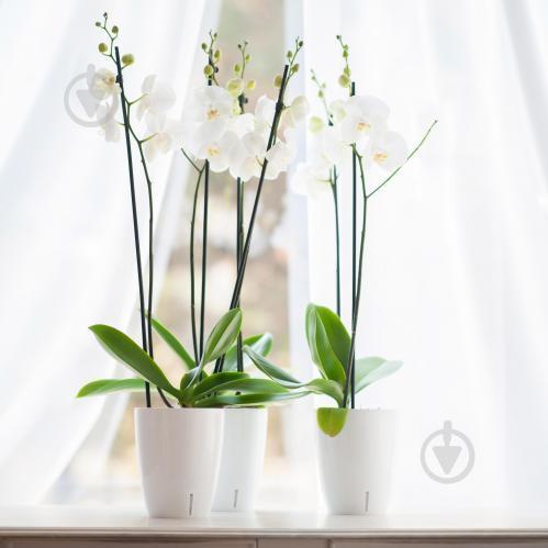 Вазон с автополивом Орхидея TWIN