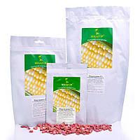 Семена сахарной кукурузы Гермиона, F1, Sh2-тип Мнагор 1 000 сем., насіння солодкої цукрової кукурудзи