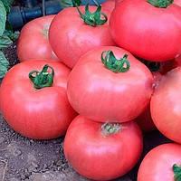 МЕЛМАН F1 - семена томата, Lark Seed 1 000 семян