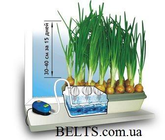Аэросад Луковое счастье – домашняя гидропонная грядка для зеленного лука