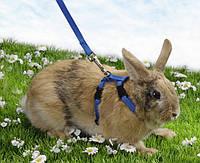 Pet Pro (Пет Про) Шлея для кролика с поводком нейлон