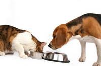 Технология производства корма для домашних животных